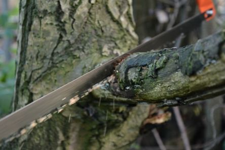bow saw being used on tree branch