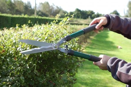 Forged Hedge Shears