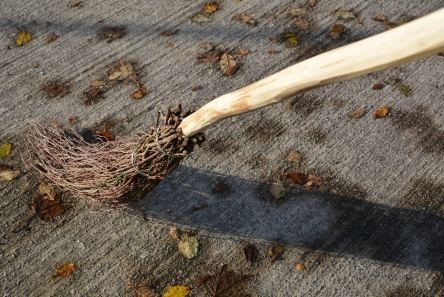 traditional besom broom